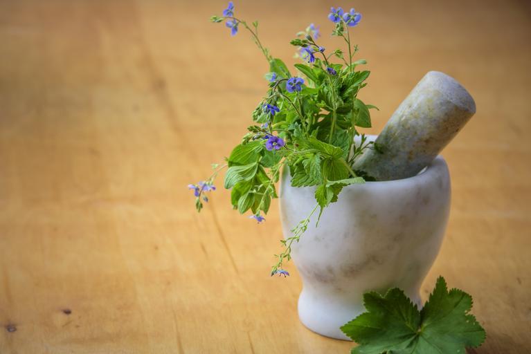 Rostlina v hmoždíři